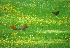 Eichhörnchen und Amsel auf der Maiwiese - Jahreszeiten - Galerie - Community