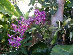 Open Garden Tours And Sales | Exotica Tropicals – Tropical Plants ...