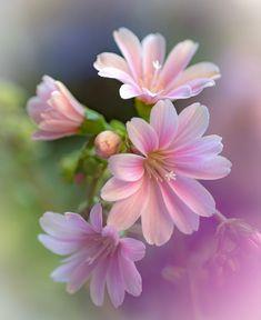 Exotic flowers – Home Decor Gardening Flowers Wallpaper Nature Flowers, Flowers Nature, Exotic Flowers, Flower Wallpaper, Amazing Flowers, My Flower, Beautiful Roses, Flower Art, Pink Flowers