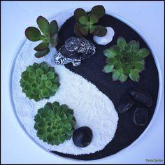 Mini Zen Garden Succulents by Omini Jardim