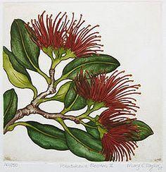 New Zealand prints at Art by the sea, fine art gallery in Devonport, Auckland, New Zealand Botanical Drawings, Botanical Art, Botanical Illustration, Fun Craft, Craft Ideas, Craft Tutorials, Craft Projects, Maori Designs, New Zealand Art