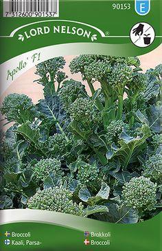 Broccoli Apollo F1