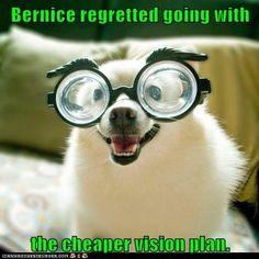 #Funny #dogs #pics #caption