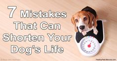 There are common things pet owners do that can negatively affect their dog's quality of life. Here are some pet care mistakes you should know about. http://healthypets.mercola.com/sites/healthypets/archive/2016/06/08/dog-care-mistakes.aspx