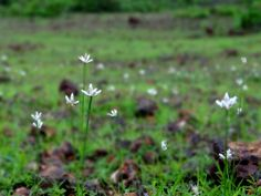 Wildflowers - Mardol, Verna