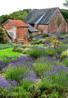 Isle of Wight Lavender Inc. (farm, tea room, store), Newport, Isle of Wight. English Garden Design, Cottage Garden Design, Country Barns, Old Barns, Country Life, Country Living, French Country, Growing Lavender, Most Beautiful Gardens