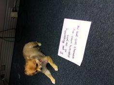 Bella Bulldog want to be