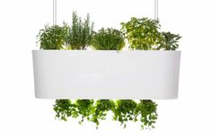 While I like the idea of this hanging over my kitchen island and simply trimming some fresh cilantro when the mood strikes- the link goes nowhere.  Oh well- I will simply keep it for my fantasy collection.