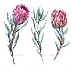 Buy Watercolor Tropical Flower Protea by Zenina on GraphicRiver. Beautiful vector image with nice watercolor tropical flower protea Tropical Flowers, Tropical Flower Tattoos, Exotic Flowers, Protea Art, Protea Flower, Flowers Australia, Vine Tattoos, Tatoos, Watercolor Paintings For Beginners