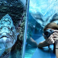 @Cretaquarium @Crete @CreteRegion @myhersonissos #Greeksummer @VisitGreecegr @DiscoverGRcom #lovingreece #lp #menoumellada  #creteaquarium @visitgreecegr @heraklion_info_point @myhersonissos  #lovingreece #aquarium#sea #marine #underwater #marinelife #research Heraklion, Crete, Marine Life, Lp, Underwater, Aquarium, Photo And Video, People, Instagram
