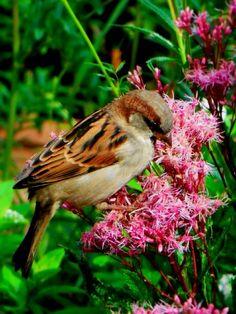 #bird #flower #cute #denmark <3