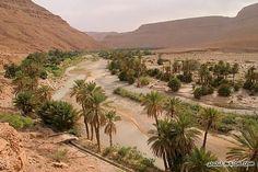 Mon Maroc d'Amour....oasis dans la vallée de Ziz