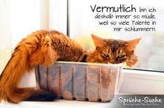 Lustiger Spruch mit müder Katze im Plastebehältnis