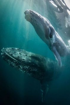 Photo of humpback whales