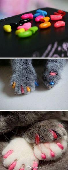 "【猫指甲套】戴了猫咪指甲套,好像做了美甲噢~~太萌了!~~家里的猫咪带上这个后,就不怕抓坏地板沙发啦... I bet that says, ""Cool kitty claw protectors. My cat will be fabulous!"" I don't know. I don't speak Chinese...Sorry pinners"