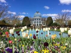 Lewis Ginter Botanical Garden tulips and Conservatory, Richmond, Virginia. #WhyHB #visitrichmond