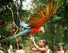 Guia Tour & Shop: Gestão Integrada do Turismo de Foz do Iguaçu – edi...