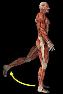 Excellent article on the importance of hamstring training.