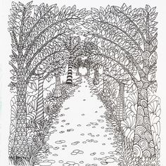 A Magical Tree Lined Walkway From The Color Me Calm Adult Colouring Book By Lacy Mucklow