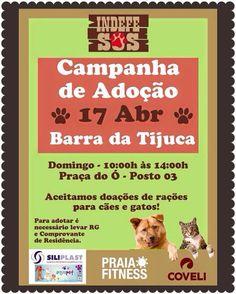 BONDE DA BARDOT: RJ: Adoção de cães e gatos na Barra da Tijuca, neste domingo (17/04)