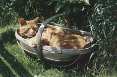 cat in a trug