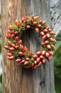 Rose hip wreaths come in many different styles, allowing you to decorate for a range of holidays and seasons. Not only are they diverse, but rose hip wreaths are also quite unique compared to the typical pinecone wreath. Autumn Wreaths, Christmas Wreaths, Christmas Decorations, Moss Wreath, Diy Wreath, Wreaths And Garlands, Door Wreaths, Autumn Inspiration, Christmas Inspiration