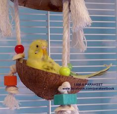 In My Cradle (from \I Am a Parakeet: Parakeet Book for Kids\)