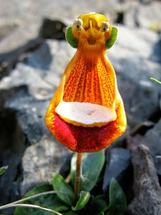 Flowers You Wont Believe Actually Exist