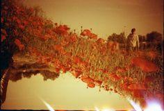 Ein Foto von claudi1007 - Lomography