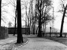 Fallschirmsprungturm auf der Peißnitz in Halle, um 1960. Foto: Walter Danz