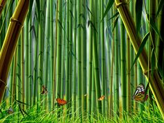 Bamboo Forest - wallpaper download