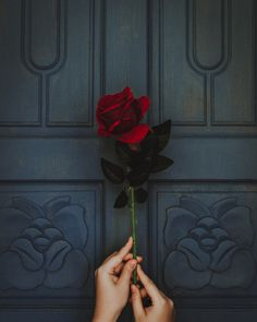 photo of person holding red rose flower Rose in hand Red Rose Flower, Red Flowers, Red Roses, Beautiful Flowers, Flower Blossom, Black Roses, Flower Phone Wallpaper, Flower Wallpaper, Wallpaper Backgrounds