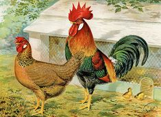 Vintage Rooster and Hen Brown Leghorn Chicken от TheOldDesignShop Leghorn Chickens, Leghorn Rooster, Best Egg Laying Chickens, Painting Prints, Art Prints, Paintings, Chicken Art, Chicken Ideas, Chicken Logo