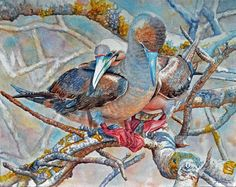 Galapagos Red Footed Boobies Art World, Watercolor, Artist, Red, Painting, Pen And Wash, Watercolor Painting, Artists, Painting Art