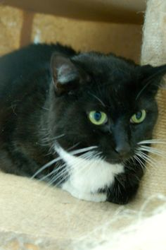 Batavia, OH. Jane. URGENT! Clermont County Humane Society I am three to four years old. I was found as a stray in the Milford area. I am very lovable and just want to find my forever home.