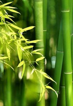 Réussir la taille du bambou en 3 étapes (FACILE) | Détente Jardin
