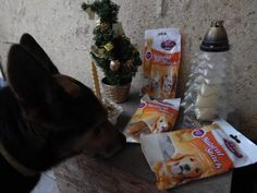 ZooZoo - Fifi - kutya - keverék