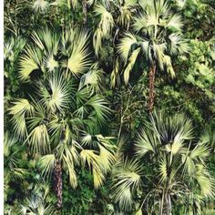This iconic Pierre Frey wallpaper design is a painting inspired by the aerial photograph of a tropical forest. Iconic wallpaper design that makes a bold and impressive statement in a modern tropical inspired home. Palm Wallpaper, Print Wallpaper, Tropical Forest, Tropical Paradise, Exotic Homes, Jungle Room, Modern Tropical, Tropical Pattern, Designer Wallpaper
