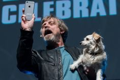 Mark Hamill and Carrie Fisher's dogs were denied entry to Star Wars wrap party Star Wars Cast, Star Wars Film, Mark Hamill Luke Skywalker, Cuadros Star Wars, Episode Vii, Star Wars Pictures, Carrie Fisher, Star Wars Humor, Princess Leia