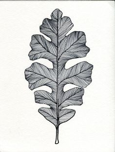 English Oak Leaf Print of original Pen and Ink Drawing - Black or Green on Etsy Leaf Drawing, Painting & Drawing, Oak Leaf Tattoos, Ink Pen Drawings, Pen Art, Art Plastique, Leaf Prints, Art Inspo, Illustration Art