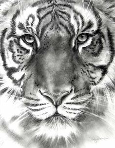 http://pattystorms.com/images/patty-drawing-source/a13-tiger-12x15-pencil.jpg