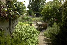 """Lessons Learned: From """"Neglected"""" Slope to Charming Garden, in South London: Gardenista"""