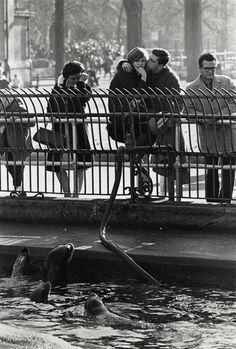 Garry Winogrand. Central Park Zoo.  New York. C. 1963  [::SemAp FB || SemAp::]