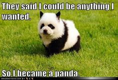 funny dog pictures - They said I could be anything I wanted.  So I became a panda.