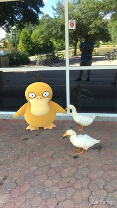 "becausebirds: ""Hangin' with the fam "" Pokemon Go Photos, Fotos Do Pokemon, Pokemon Memes, Pokemon Funny, Cute Pokemon, Random Pokemon, Common Kingfisher, Mudkip, Go Game"