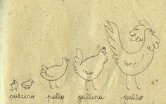 Learning Italian Language ~  Pulcino, pollo, gallina, gallo