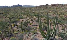 Photographs of Organ Pipe Cactus National Monument