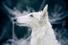 Dogs 15 #Dog #dogs #animal #animals #nature #paw #photo #photography #fliiby #images #yyazilim #people #nature
