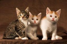 Ile kotów, tyle kuwet?