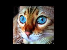 Cute cats and kittens slideshow October 2015 - part 1 Cute Cats And Kittens, Cool Cats, Cute Pictures, Owl, October, Bird, Videos, Youtube, Animals